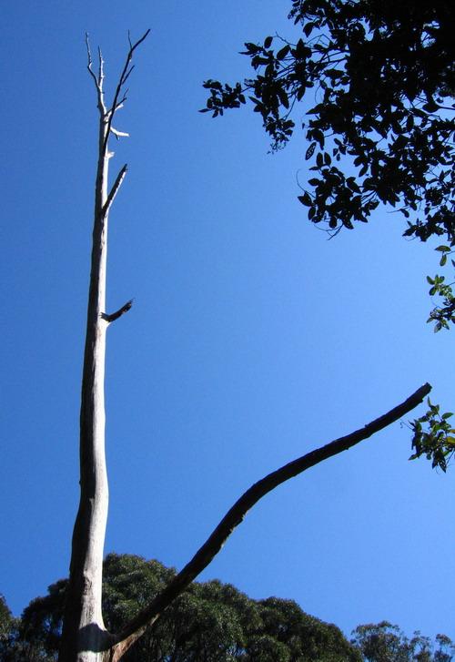 dn_tree.jpg