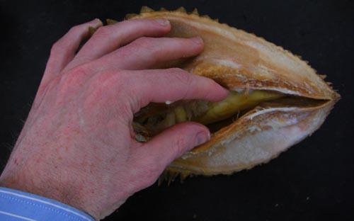 durian_open_hand.jpg