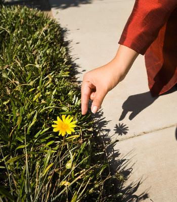 pick_flower.jpg