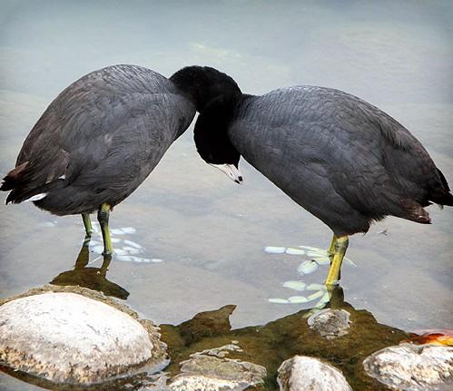 birds_loving.jpg