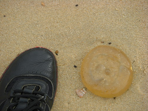 jellyfish shoe