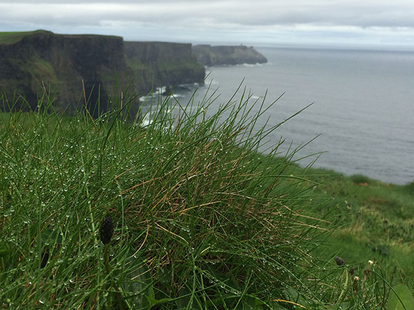 moher cliff with grass